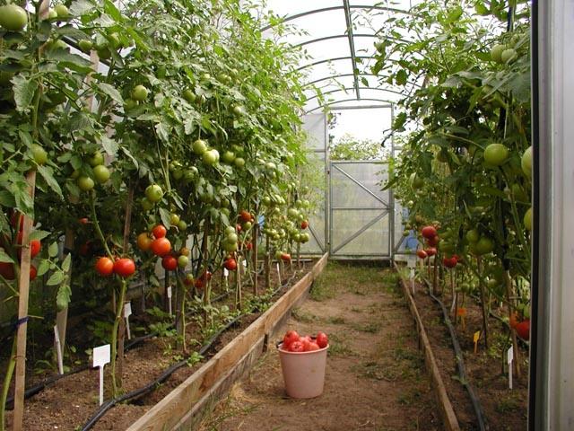 Создаем теплицу для овощей и фруктов