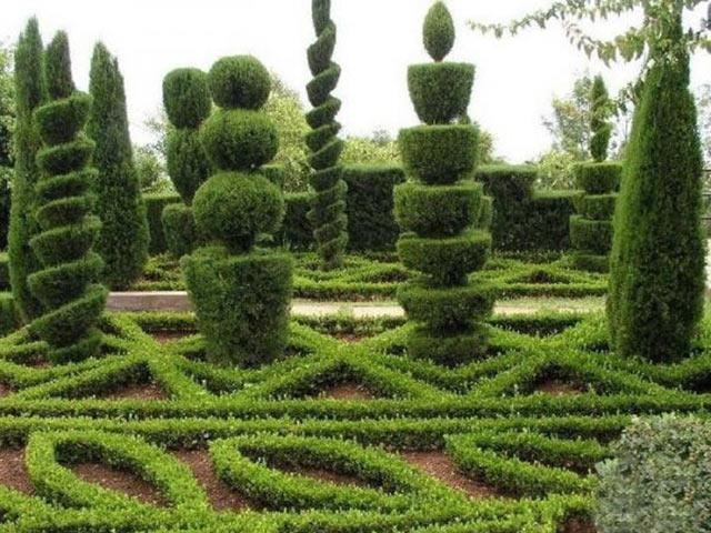 Украшаем сад вечнозелеными растениями